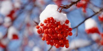 冬に食べたい讃岐うどん
